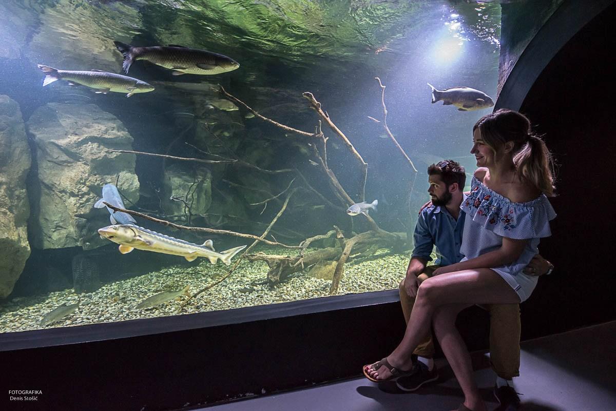 Ljubezen ob velikem akvariju, foto Denis Stošić