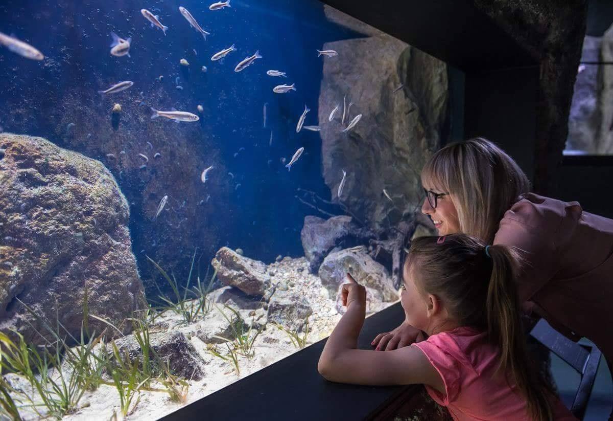 Mama in hči pred akvarijem, foto Denis Stošić