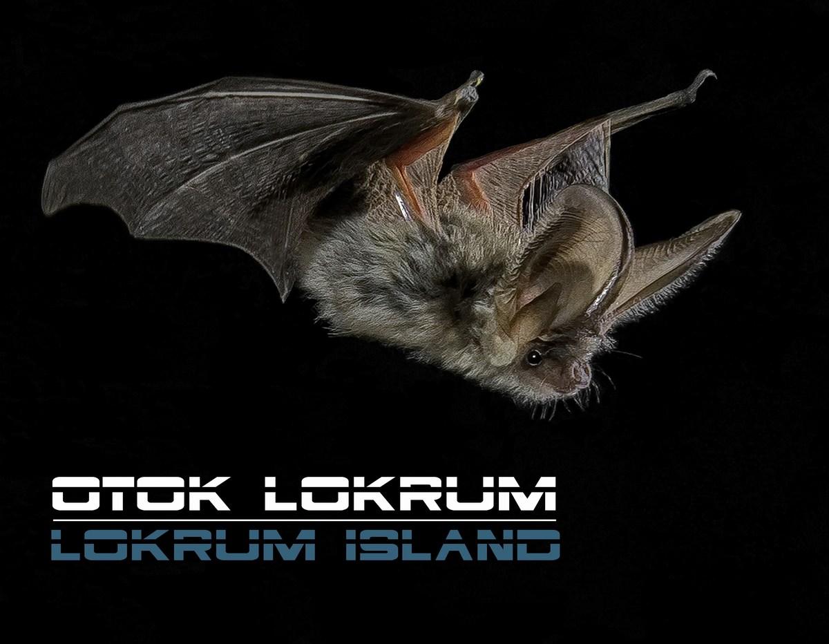 Netopirji, otok Lokrum