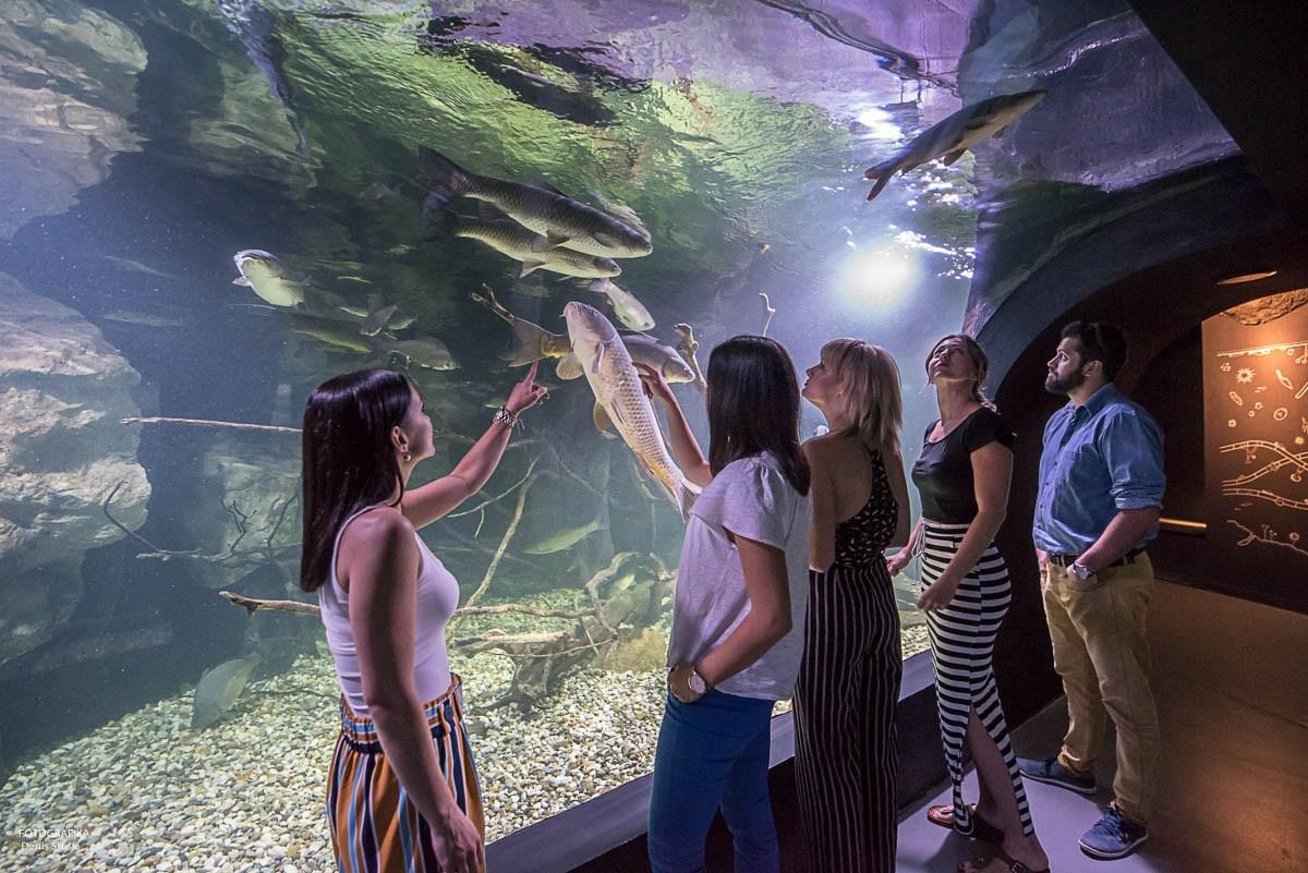 Obiskovalci pred velikim akvarijem, foto Denis Stošić