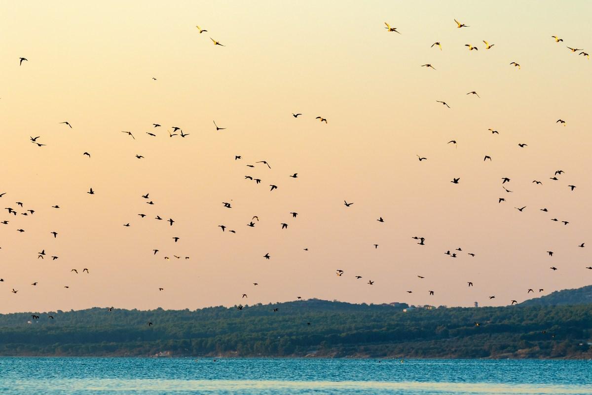 Vransko jezero, ptičji raj, foto Goran Šafarek