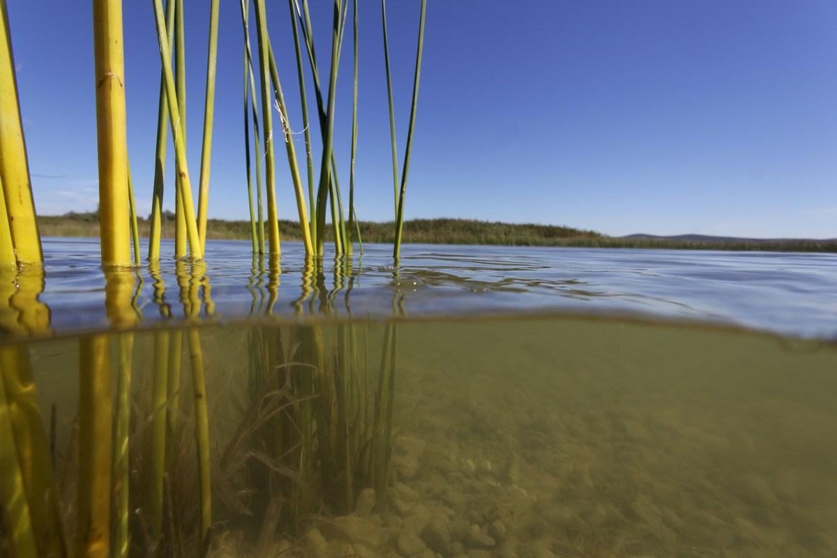 Vransko jezero, voda, foto Goran Šafarek