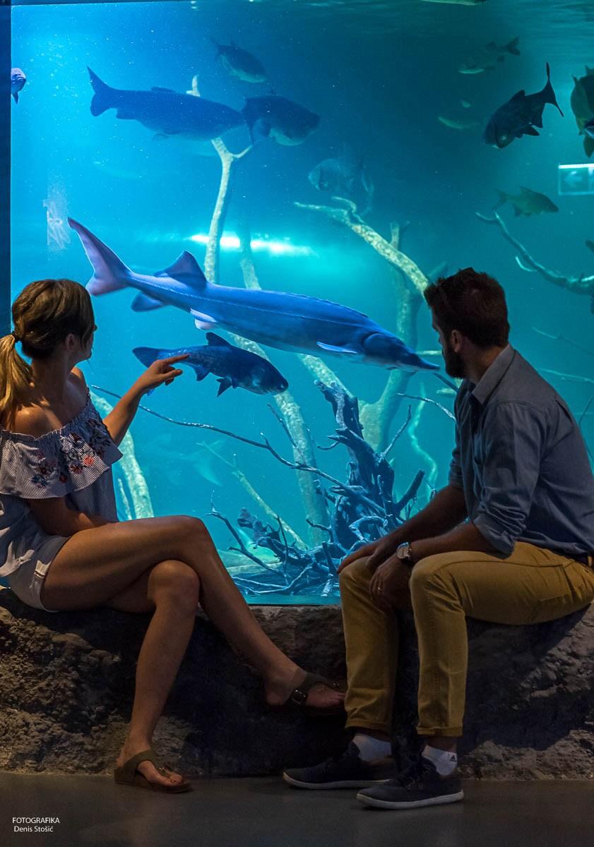 mini-autor Denis Stošić_veliki akvarij