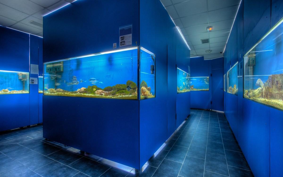 Akvarij Baška, jadranski živalski svet