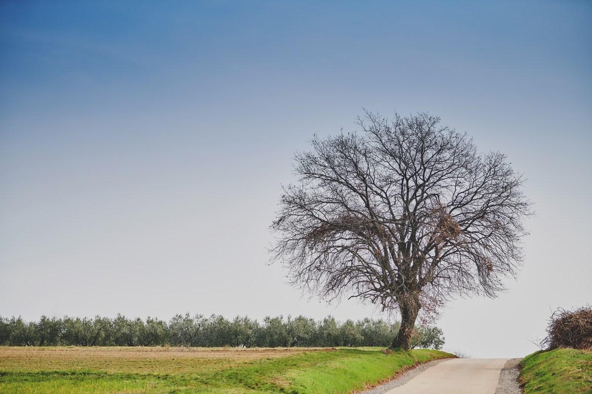 Drevo, Radini