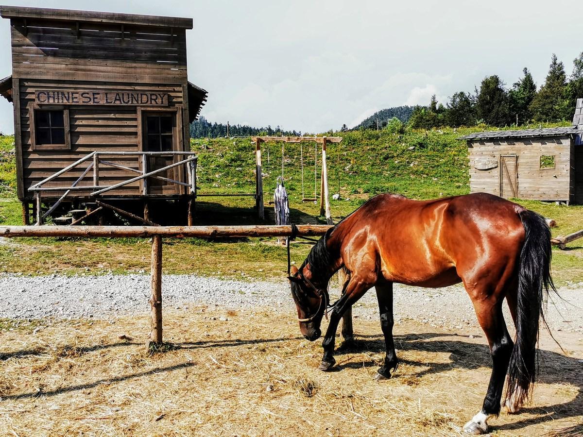 Kitajska pralnica in konj