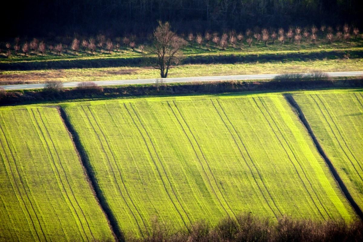 Narava slika zeleno