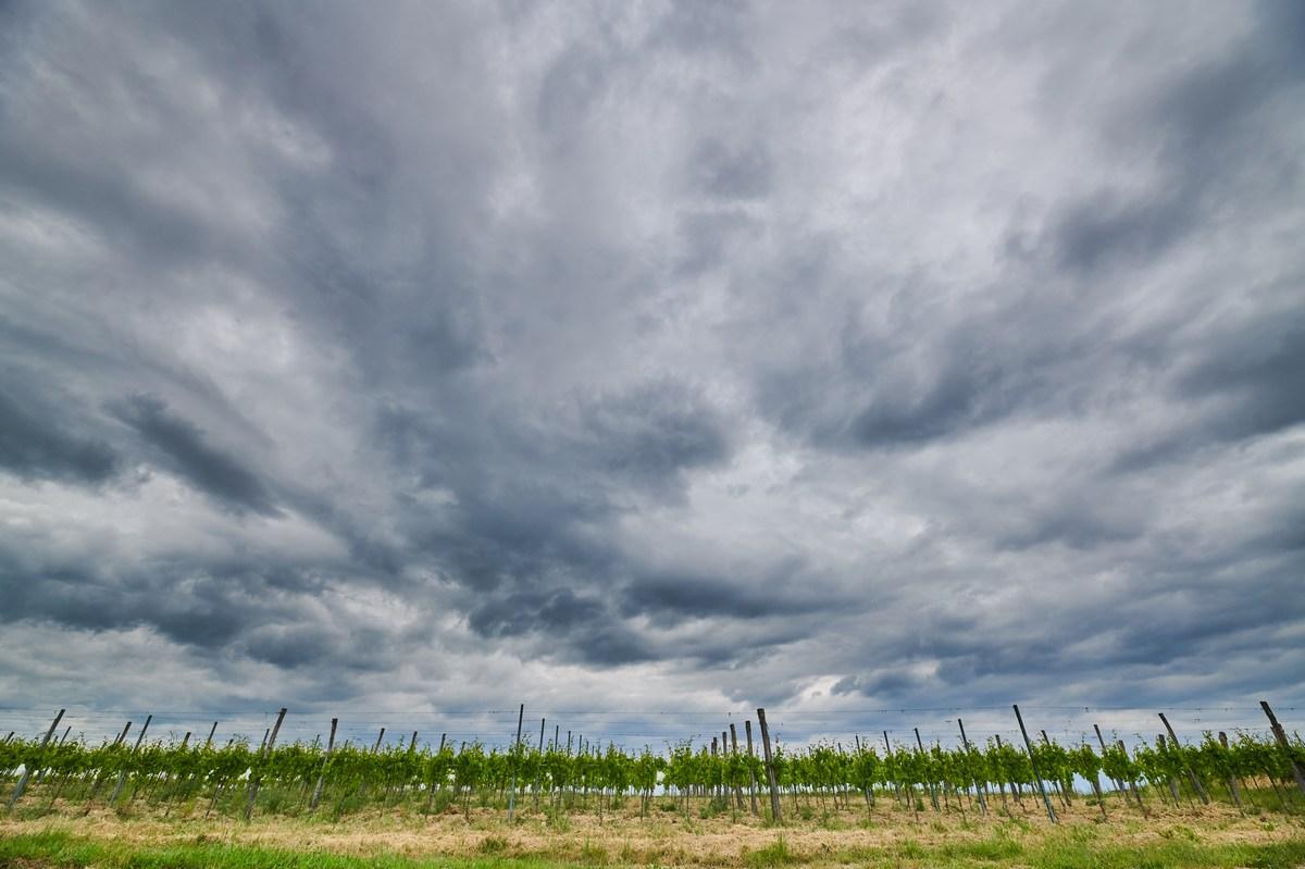 Oblaki in vinogradi, Wine and Walk