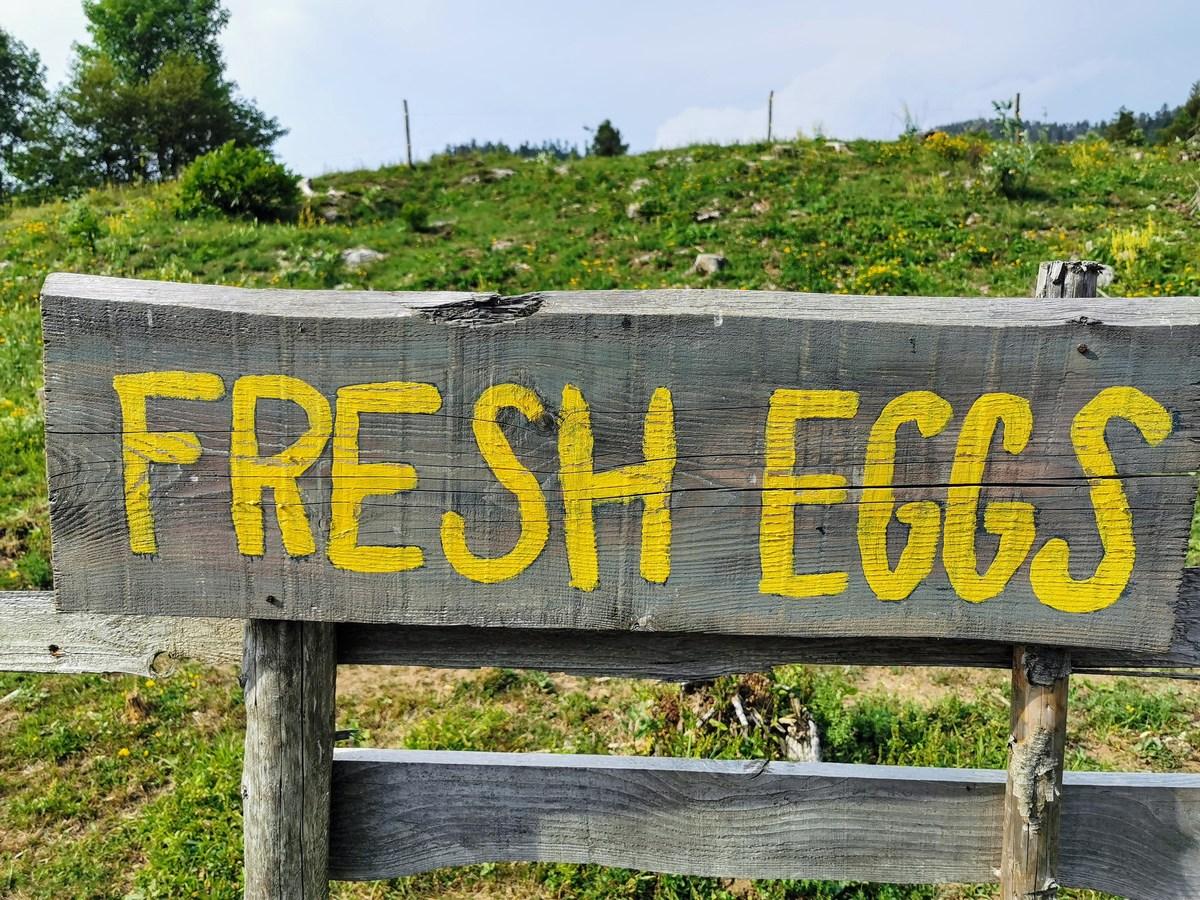 Sveža jajca