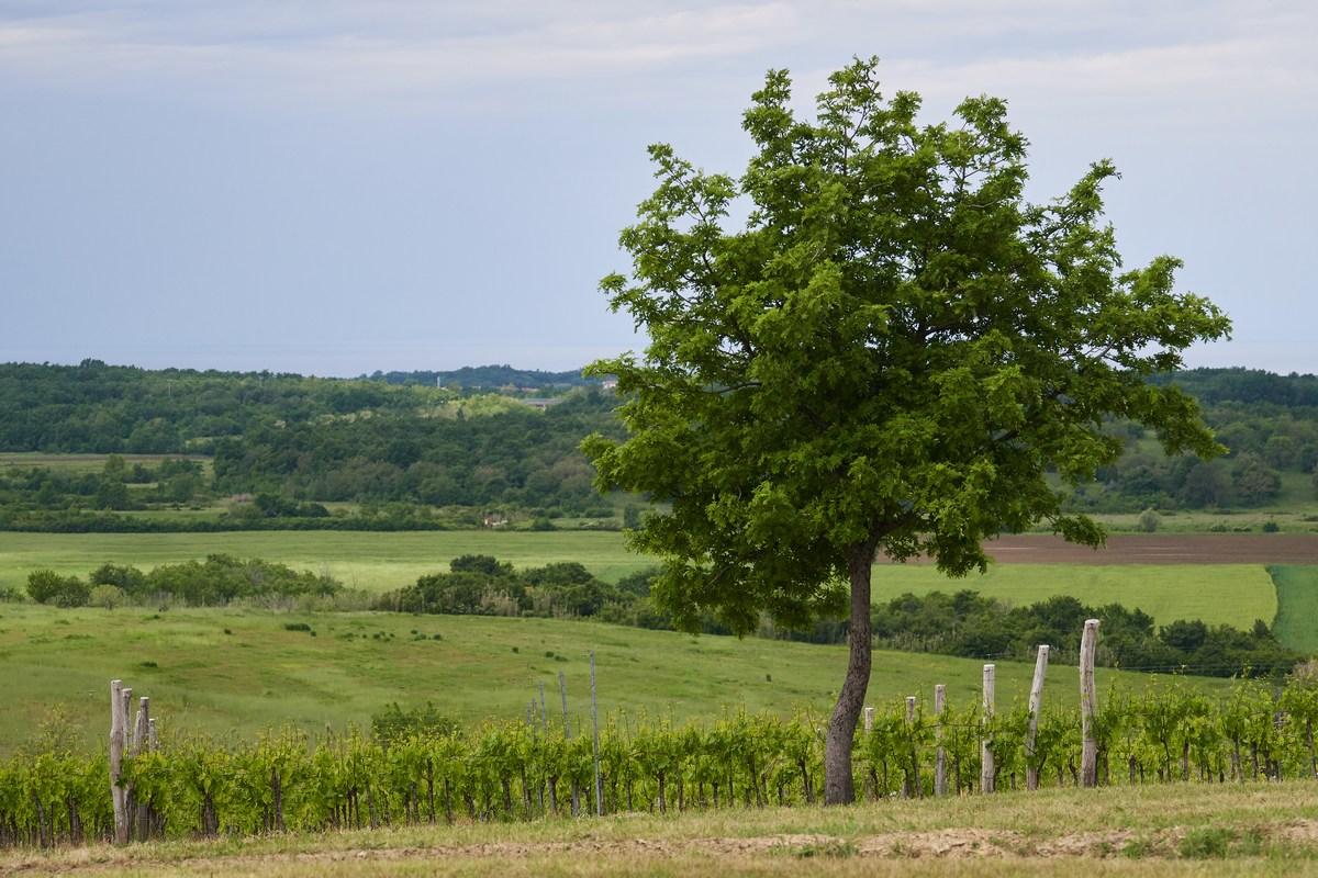 Wine_and_walk, razgledi