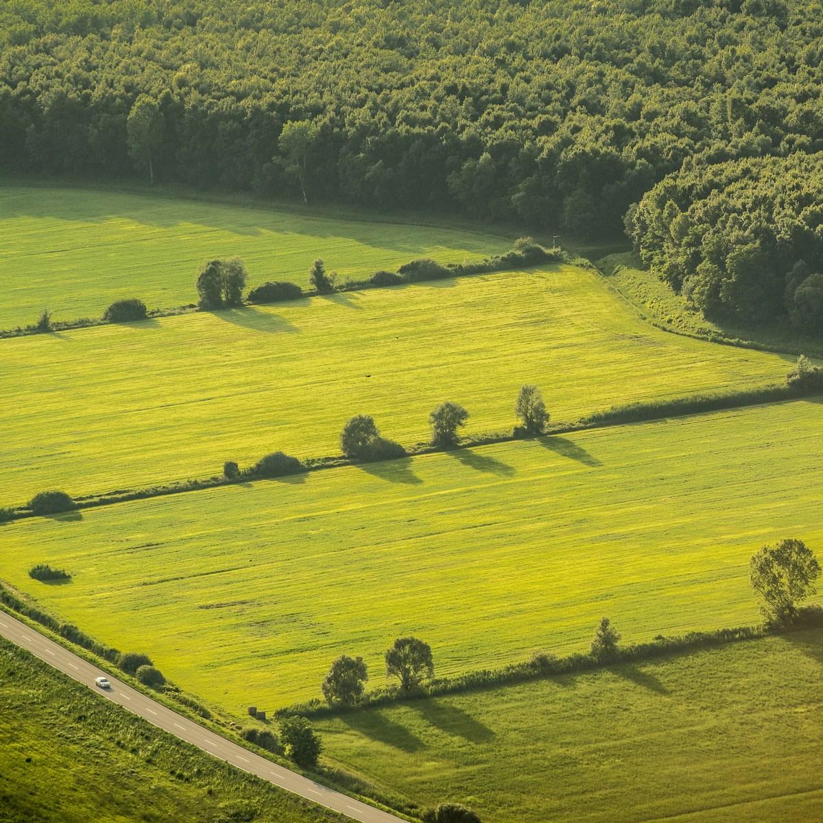 Zelena narava