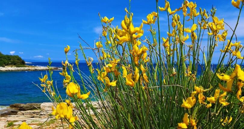 Ližnjan, idilična narava jugovzhoda Istre