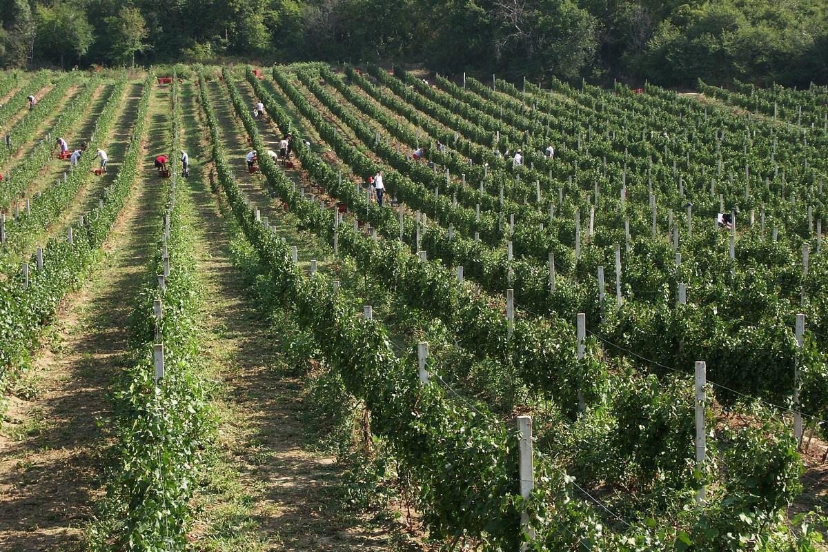 Vinogradi Pavlomir