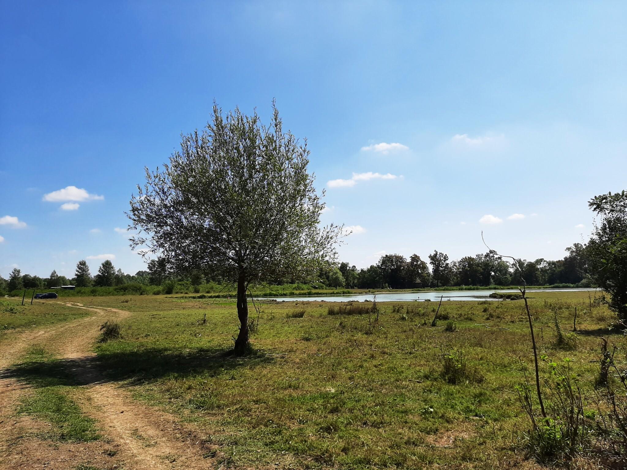 Odransko polje (5)